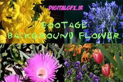 فوتیج گلهای بهاری