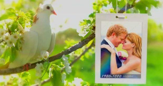 پروژه اماده کبوتر مخصوص عروسی