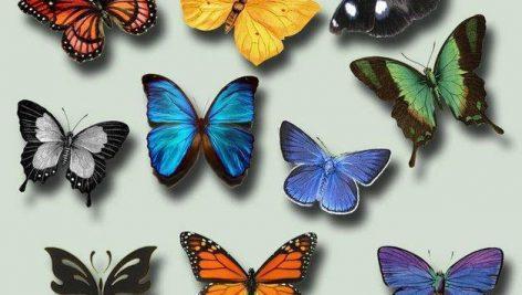 دانلود رایگان تصاویر لایه باز : پروانه (PNG)