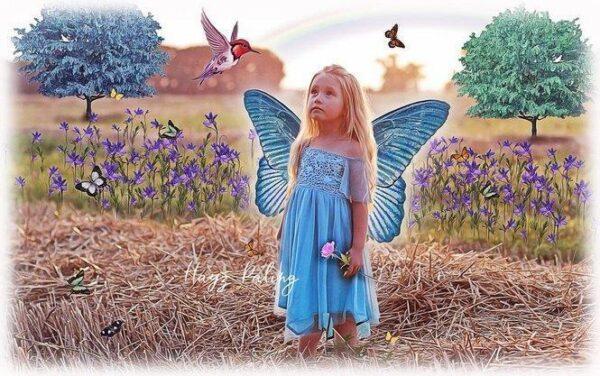 دانلود رایگان تصاویر لایه باز : پروانه