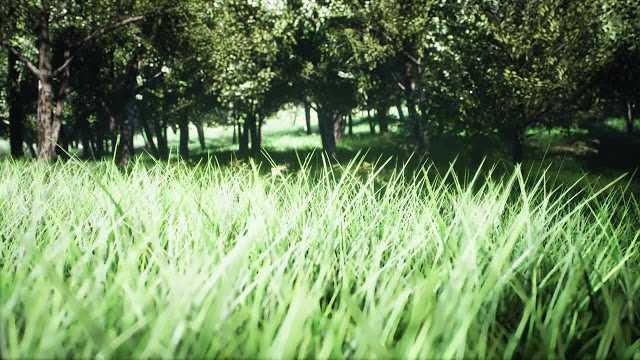 دانلود استوک فوتیج گردش در پارک
