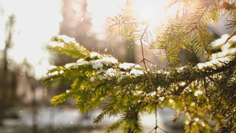 دانلود استوک فوتیج : برف زمستان