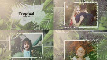 پروژه اماده افترافکت اسلایدشو جنگل گرمسیر Tropical Slideshow