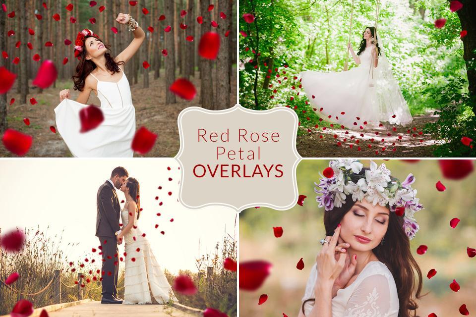 دانلود رایگان لایه باز گلبرگ رز قرمز Red Rose Petal Overlays