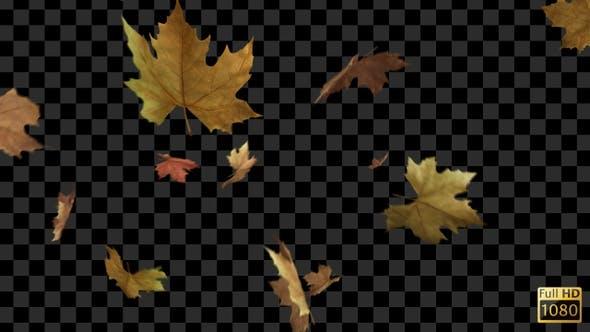 فوتیج برگهای در حال سقوط پاییزی Autumn Leaves Falling