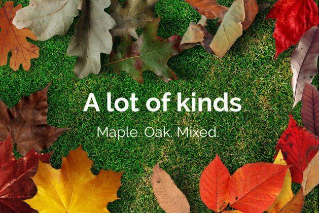 لایه باز ریختن برگ های پاییزی Autumn Leaves Photo Overlays